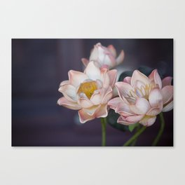 Lovely Water Lily II Canvas Print