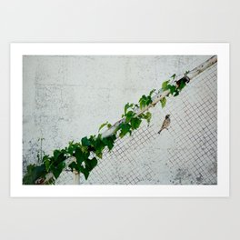 bird, perched on a fence Art Print