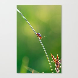 Little red bug perching on grass Canvas Print