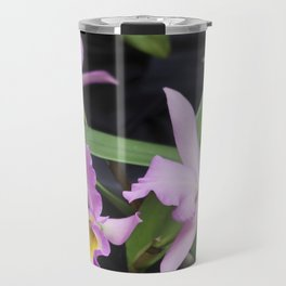 Cattleya Horace Maxima Orchid Travel Mug