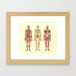 Human Female Anatomy Print Framed Art Print