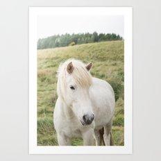 Icelandic Horse in Field Art Print