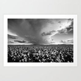 Tall Cotton - Storm Over Cotton Field in Oklahoma in Black and White Art Print