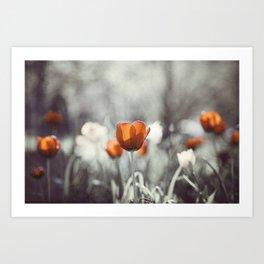 Orange Grey Tulip Photography, Burnt Orange Tulip Flowers Photo Art Print