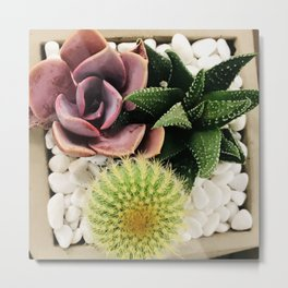 Succulent Garden in Pink Rose and Exotic Greens Metal Print