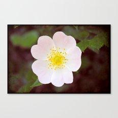 Moody Dog Rose Canvas Print