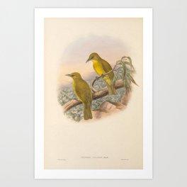 002 Halmahera Golden Bulbul criniger chloris4 Art Print