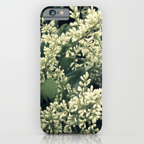 Ligustrum Blossoms iPhone & iPod Case