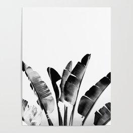 Traveler palm - bw Poster