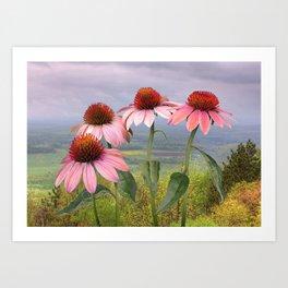 Wild Purple Coneflowers Art Print