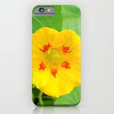 Yellow Nasturtium iPhone 6s Slim Case