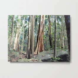 Curtis Falls Rainforest Metal Print