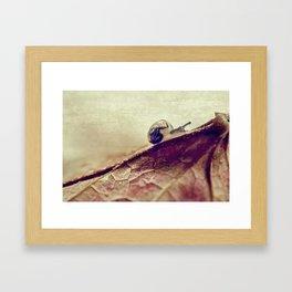 little snail Framed Art Print