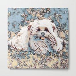 Beau the handsome dog Metal Print