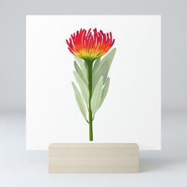 Flame Protea Flower Mini Art Print