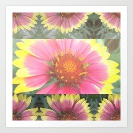 Red Coreopsis Flower Art Print