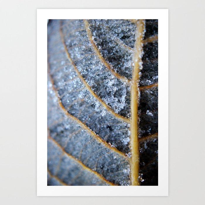 Ice Crystals on leaf Art Print