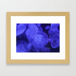Moon Jelly Fish Framed Art Print