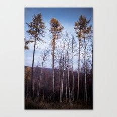 lll Canvas Print