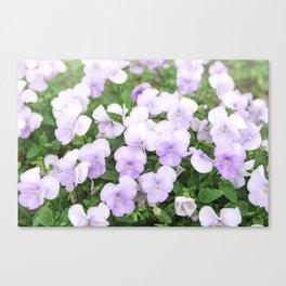 Purple small pansy garden Canvas Print