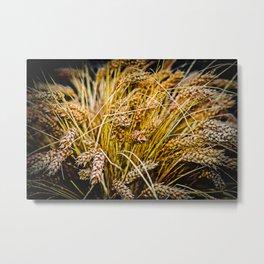 Ears Of Wheat. Thanksgiving theme Metal Print