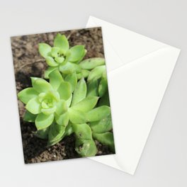 Succulents at The Sky Garden, 20 Fenchurch Street, London Stationery Cards