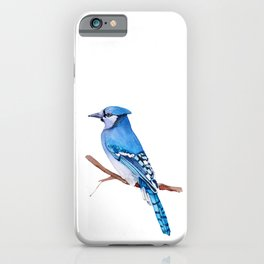 Watercolor illustration. Bright Blue Jay bird on white background. iPhone Case