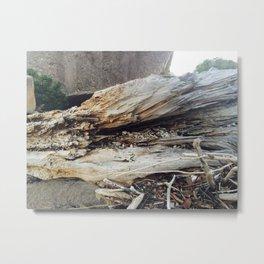 Driftwood Beauty Metal Print