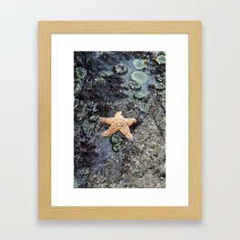 Starfish - La Push Framed Art Print