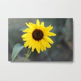 One Sunflower Windy Day Metal Print