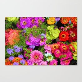 POP Zinnias Canvas Print