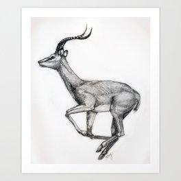 Antilope Art Print