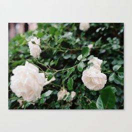 film + flowers + brooklyn Canvas Print