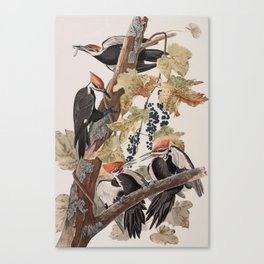 John James Audubon -Woodpecker Canvas Print