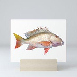 Mutton Snapper Mini Art Print
