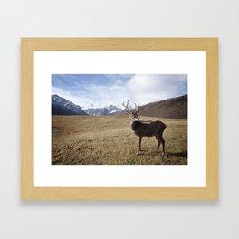 Caribou On The Tundra Framed Art Print