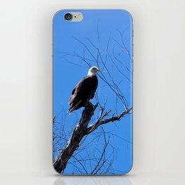 Clear Sight (Bald Eagle) iPhone Skin