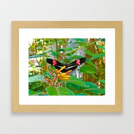 Beautiful Butterfly Framed Art Print