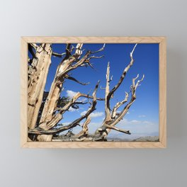 Trees of ancient times Framed Mini Art Print