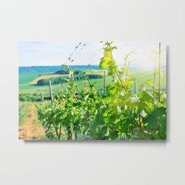 Vineyard Metal Print