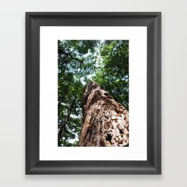Forest elder Framed Art Print