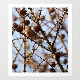Chaffinch Like Pinecones Art Print