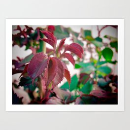 New Foliage Art Print