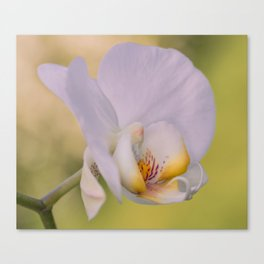 Orchid Dreams Canvas Print