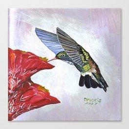 Hummingbird and Cactus Flower Canvas Print