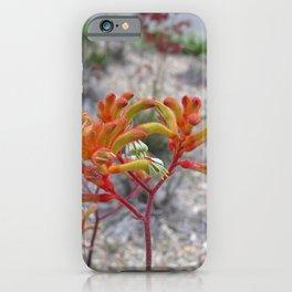 Orange Kangaroo Paw Flowers iPhone Case