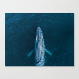 Blue Whale Exhale Canvas Print