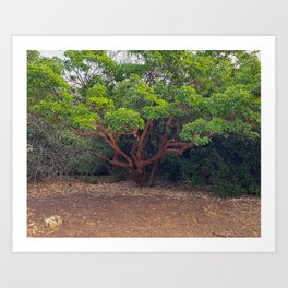 Brown Green Tree and Sand Photo Art Print
