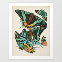 EA Seguy Papillons Vintage Scientific Insect Butterfly Biological  Species Anatomy Illustration Art Print