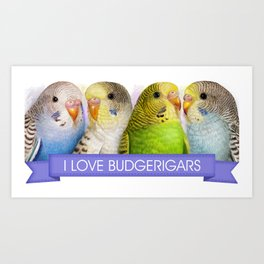 I Love Budgerigars Realistic Painting Art Print